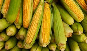 Diseñan un maíz más productivo capaz de hacer frente a climas futuros