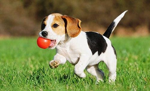 Neurocientíficos afirman que los perros entienden palabras humanas