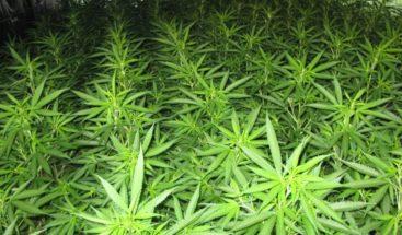 Comienza en Canadá la venta legal de marihuana