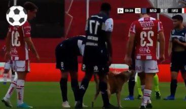 Un perro interrumpe partido de fútbol y recibe caricias de los jugadores