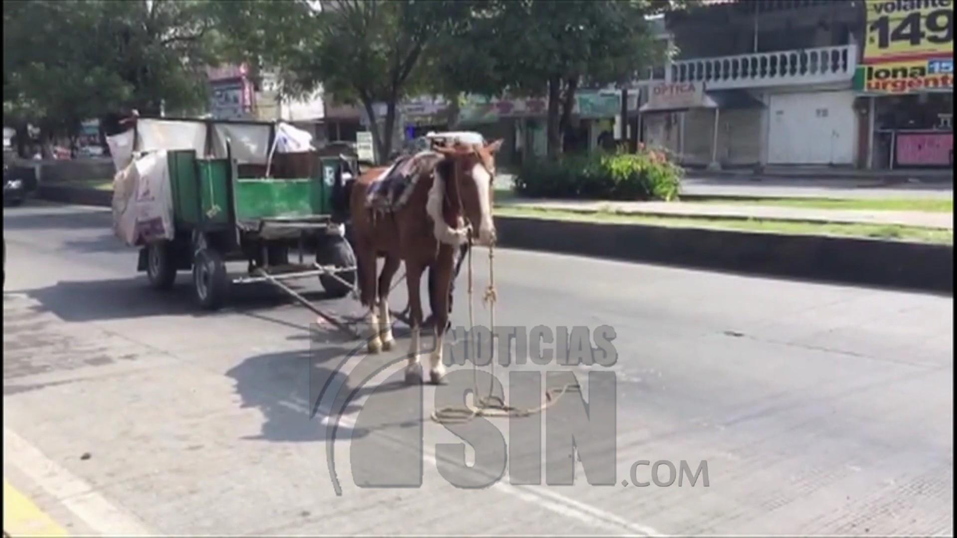 Maltrato animal en México queda captado en cámara