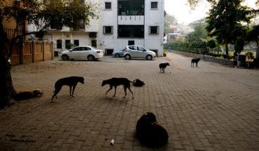 Un perro 'llora' al reencontrarse con su amo tras pasar años en la calle