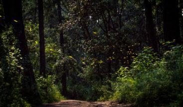 Realidad virtual conciencia a mexicanos sobre importancia de los bosques