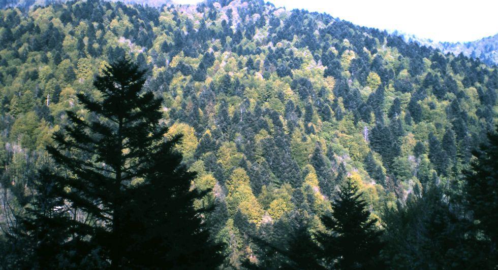 Estudio alerta de la inutilidad de usar bosques para enfriar el clima