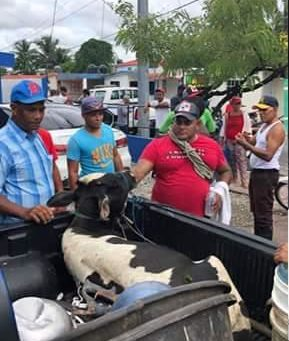 Detienen presuntos cuatreros transportando becerros dentro de un carro