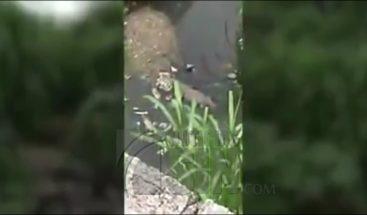 Residentes en Sabana Perdida atemorizados por supuesto cocodrilo
