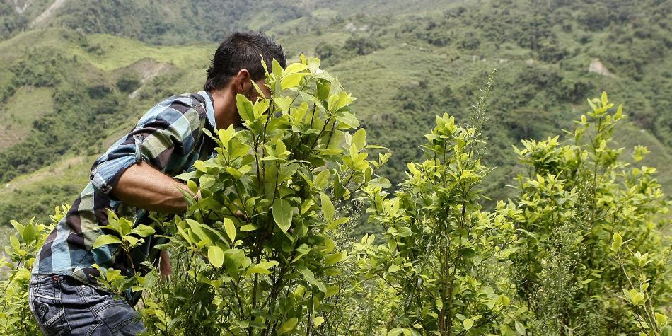 La seducción de la coca supera al miedo en el Pacífico colombiano