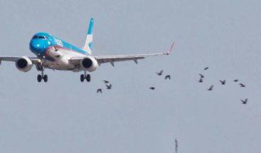 Expertos analizan prevención del peligro de aves en la aviación