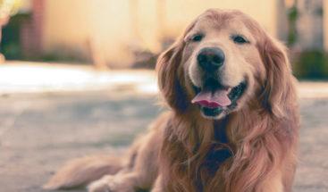 Un perro 'se roba' a otro en plena calle ante asombro de su dueña