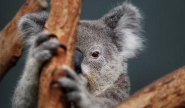 Revelan los animales más mortíferos de Australia