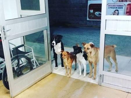 Cuatro perros esperan en un hospital mientras su dueño es atendido