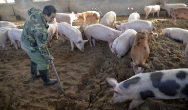 China sanciona a 223 funcionarios por no contener brote peste porcina