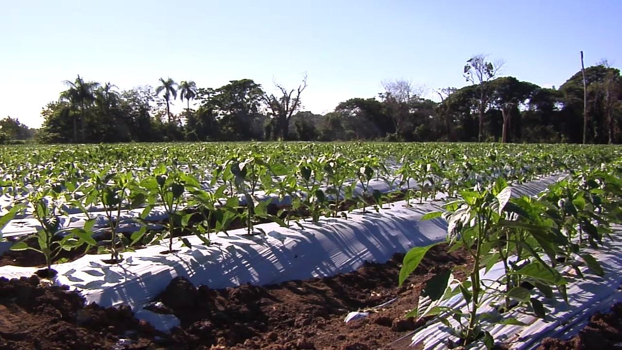 Presentan siembra de vegetales con nueva alternativa de producción en SJ