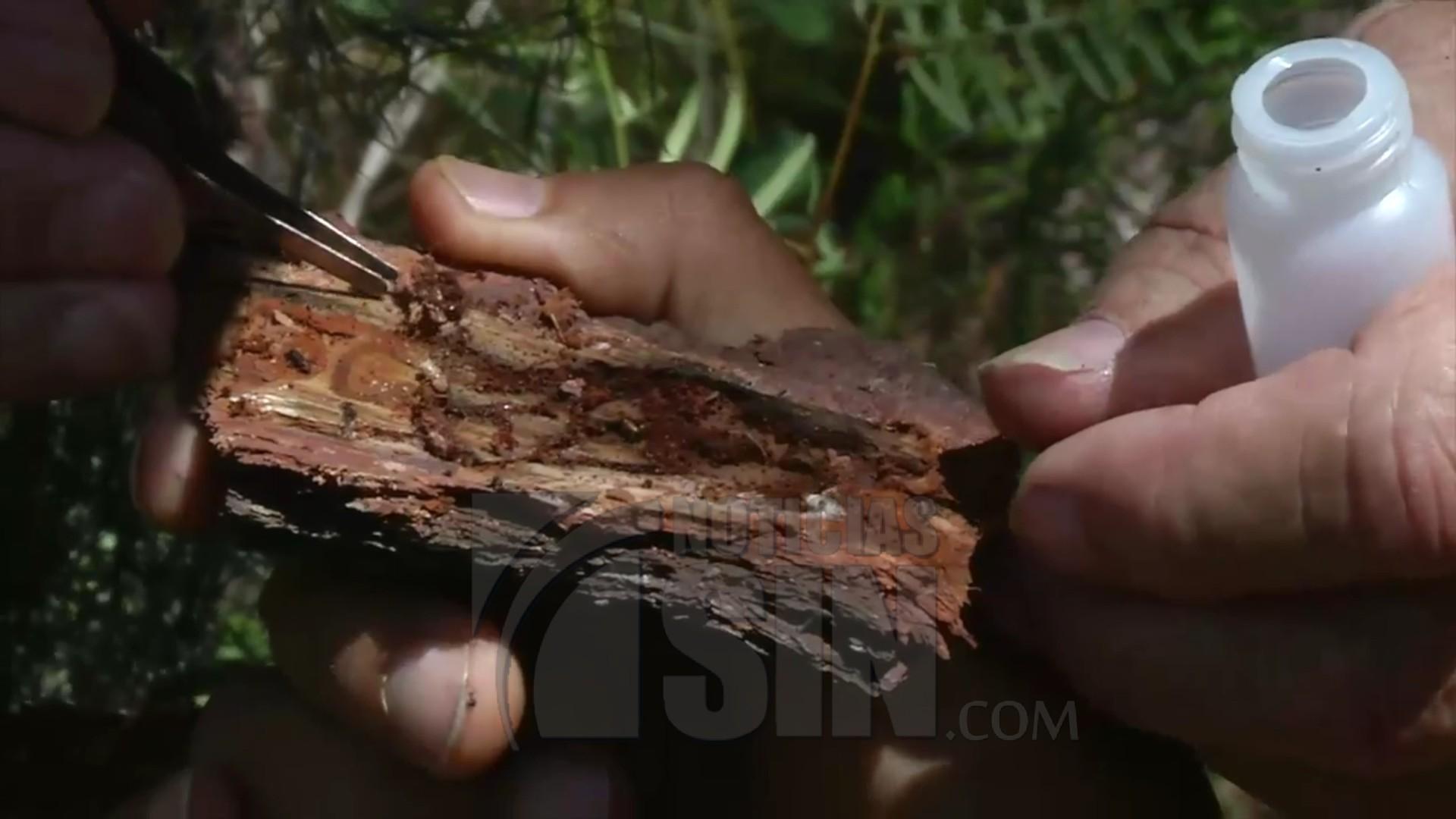 Conforma Equipo Técnico para Prevención y  Control de Plagas Forestales