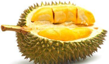Venden en 1.000 USD nueva variedad de la fruta más apestosa del mundo
