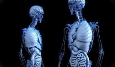 Estudio halla vínculos entre la grasa del vientre y el tamaño del cerebro