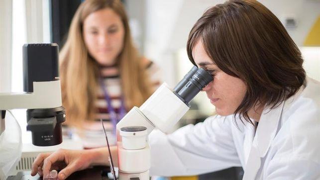 Crean de células madre minirriñones desarrollados, con riego y en solo 20 días