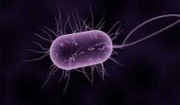 Descubren que una bacteria puede crecer en las moléculas de óxido nítrico