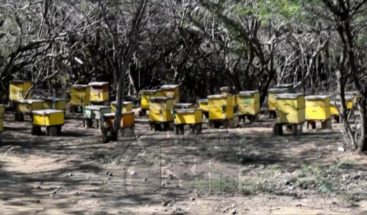 Agricultores en Montecristi reportan pérdidas millonarias debido a la sequía