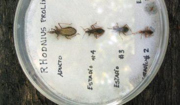 Reducir dosis y duración de tratamiento del Chagas es tan eficaz y más seguro