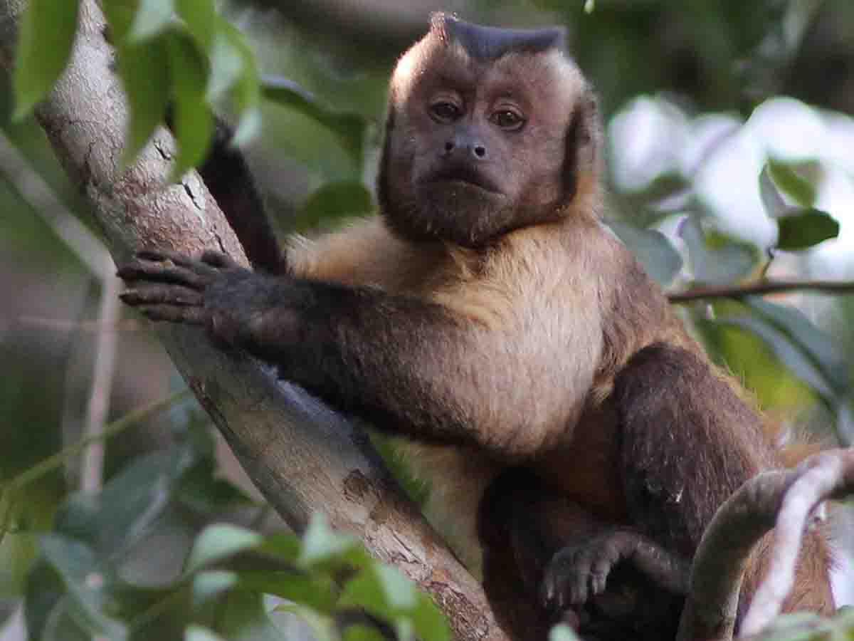 Científicos identifican a primates portadores del Zika