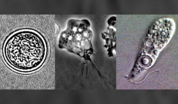 Estas son las bacterias mortales que se esconden en las piscinas de los hoteles