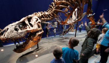 Subastan en eBay fósil de un bebé Tyrannosaurus por 3 millones de dólares indigna a científicos