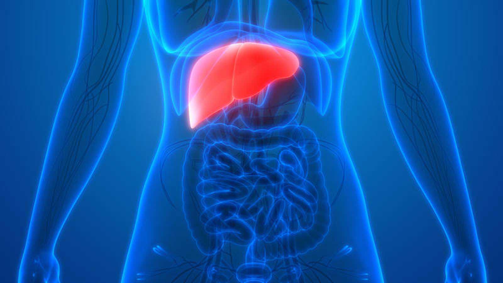 Una hormona más abundante en mujeres las protege del cáncer de hígado