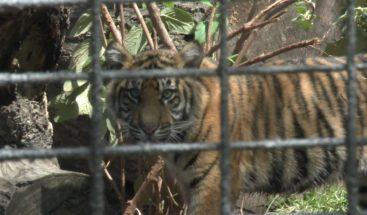 Empleado de Zoológico de Topeka, Kansas, que fue atacado por un tigre está estable