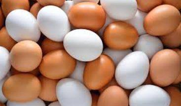 México desarrolla preparado de calcio para fortalecer cascarón de huevo