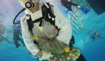 Buscan huevos de pascua debajo del mar