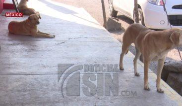 Propuesta de matar gatos y perros causa diferentes reacciones en México