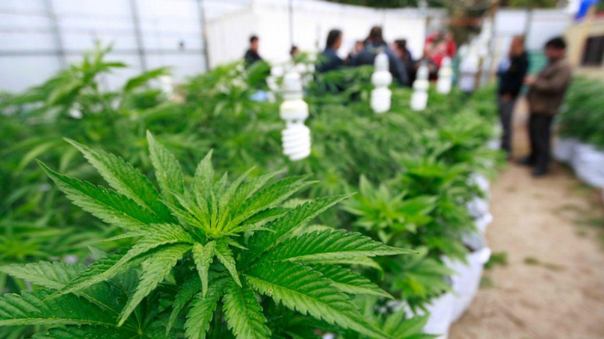 El número de canadienses que consume marihuana aumenta a 5,3 millones