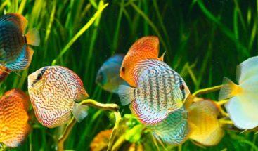 Descubren por qué algunos peces marinos se adaptan al agua dulce