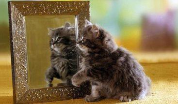 Un gato que se mira en dos espejos a la vez desconcierta a la Red