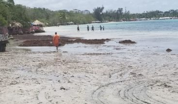 MOPC retira toneladas de sargazos de la playa Andrés Boca Chica