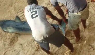 Técnicos del Ministerio de Medio Ambiente asisten en rescate de tiburón enSosúa