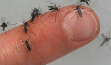 Declaran alerta sanitaria por brote de dengue en Isla de Pascua