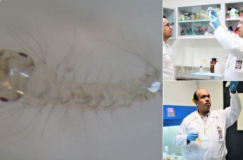 Mexicanos crean bioinsecticida para controlar zika, dengue y chikunguña