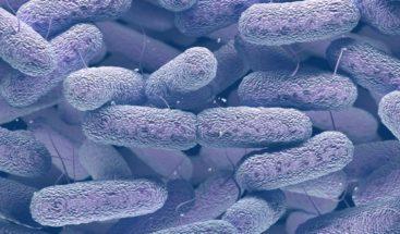 'Klebsiella', superbacteria que resiste a muchos antibióticos y se contagia en los hospitales