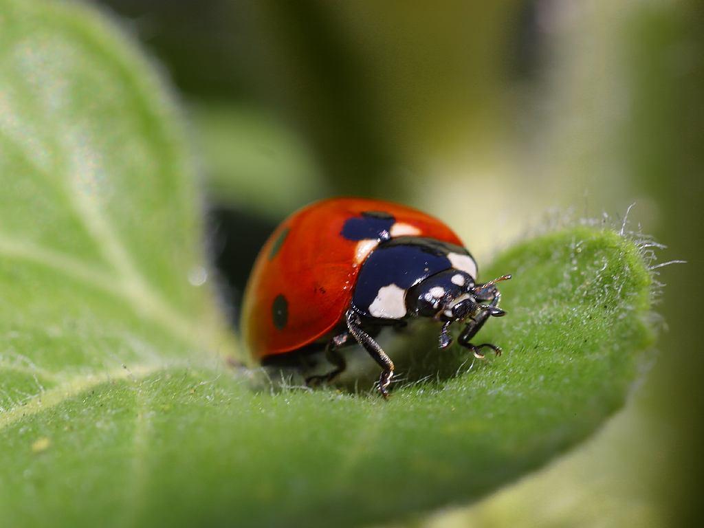 Insectos necesitan de empatía humana para mitigar su disminución poblacional