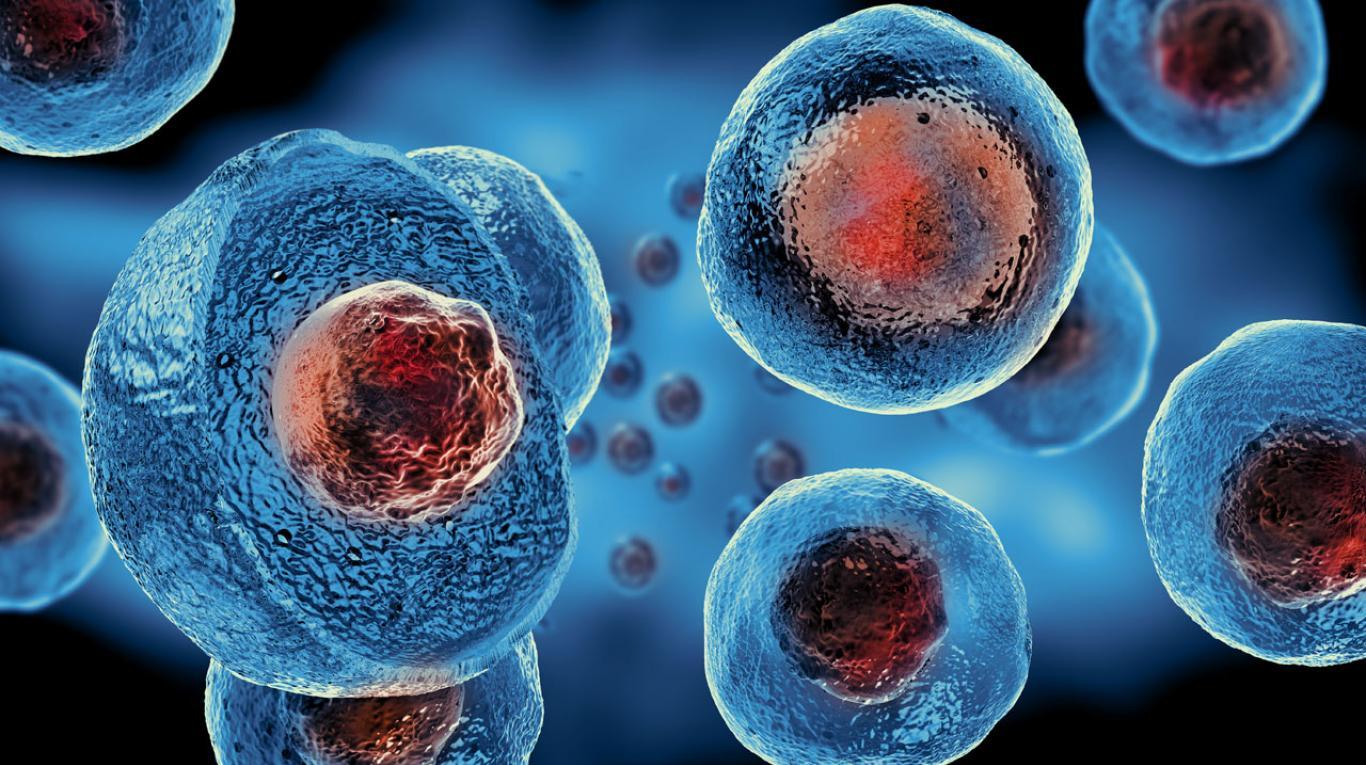 Las células madre tienen mecanismo de defensa contra bacterias, según estudio