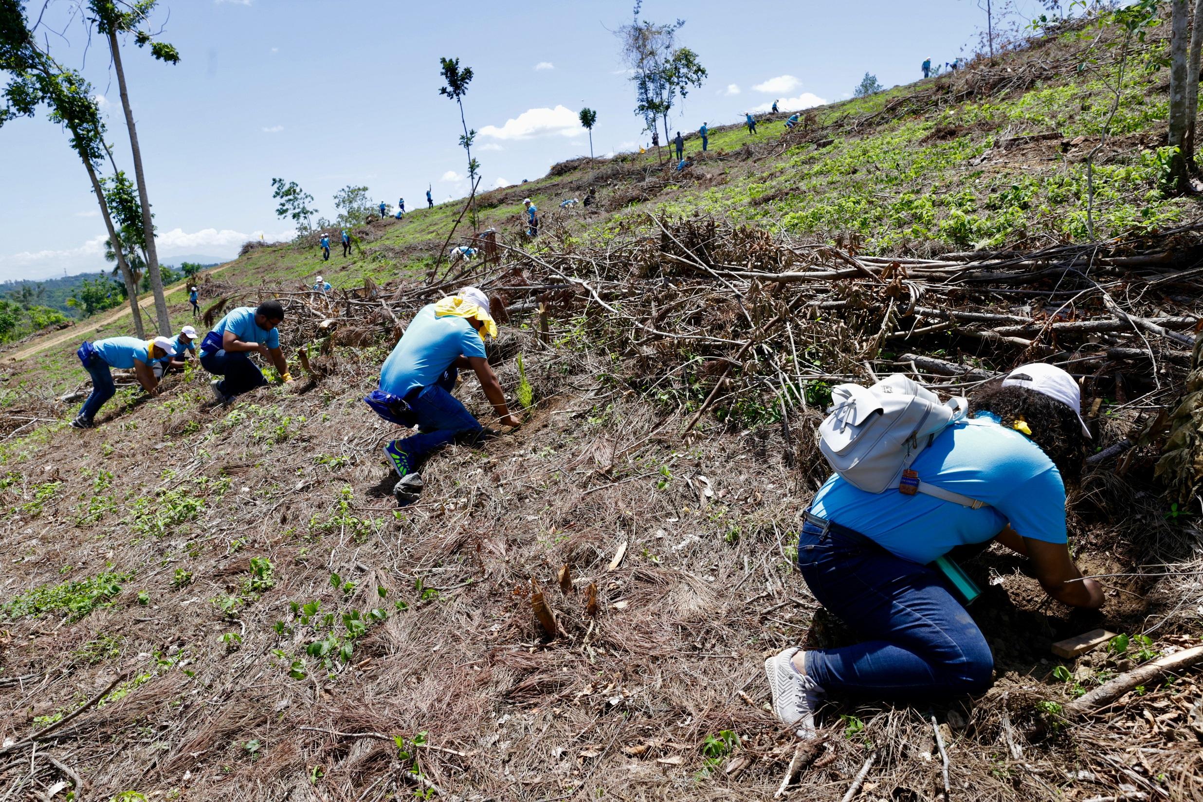 Empleados del Popular siembran 14,000 árboles en Plan Sierra