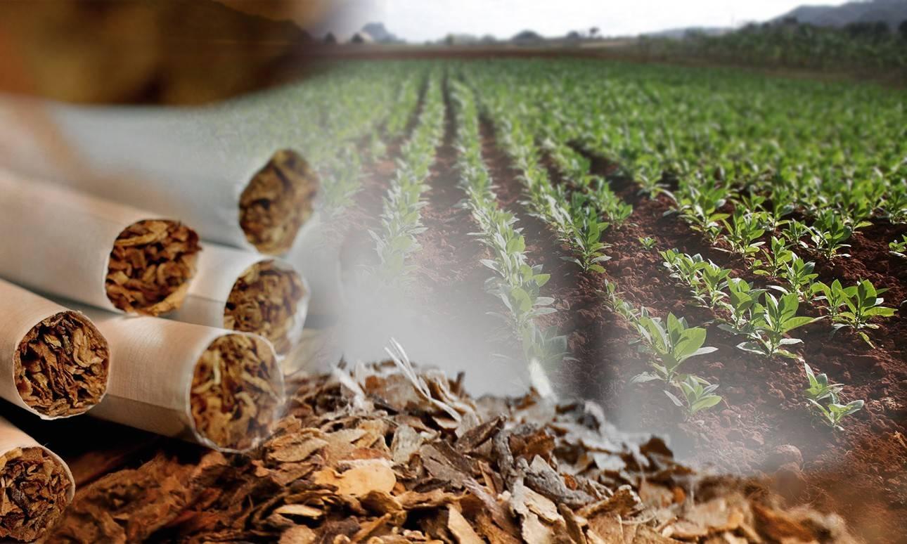 NEUMONORTE advierte sobre las consecuencias del alto consumo del tabaco