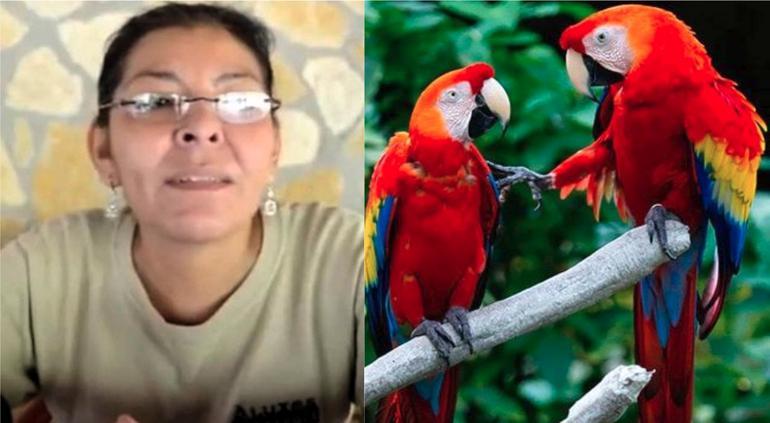 Asesinan a ambientalista mexicana defensora de la guacamaya roja