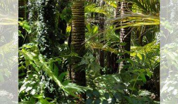 Árboles y plantas podrán almacenar más CO2 a finales de siglo, según estudio