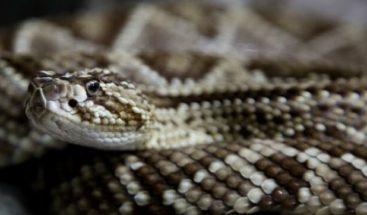 La serpiente de cascabel modifica conducta por crisis climática en México