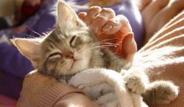 Científicos desarrollan una vacuna para que los gatos no causen alergias en humanos