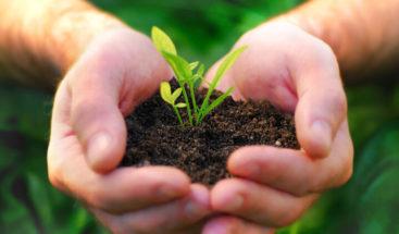 Siembran 200.000 árboles en Colombia en lucha contra deforestación