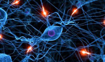 Aún no está claro si en adultos nacen nuevas neuronas, dice experto mexicano
